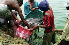 Acuicultura en Zambia