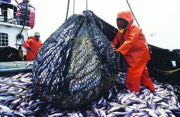 Resultado de imagen de sobrepesca