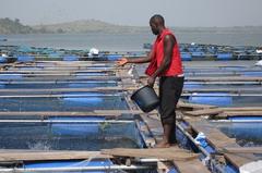 Acuicultura Nigeria. Foto: Skretting