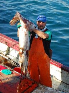 Pesca jibia Chile