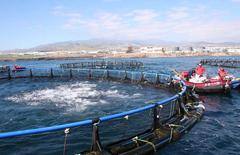 Acuicultura Gran Canaria