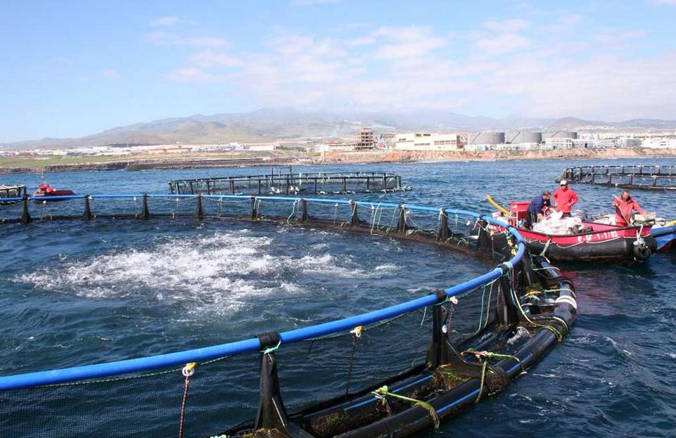 El Nuevo Ciclo Superior De Acuicultura En Canarias Se Pone
