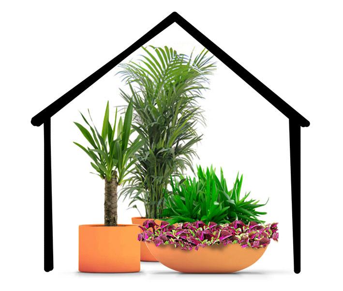 Curso de jardiner a b sica ginkgo news fundaci n sales for Curso de jardineria