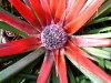 Recorrido botánico 20 de octubre