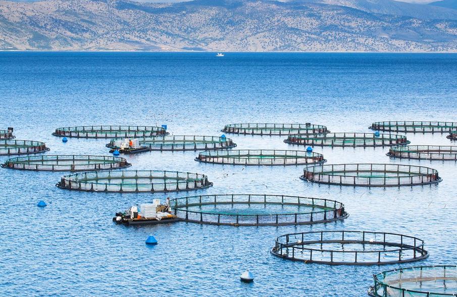 Espa a presidir el comit de acuicultura de fao durante for Jaulas flotantes para piscicultura