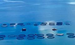 AQUATRECK_ nueva compañía farmacéutica  para  el desarrollo de productos para acuicultura