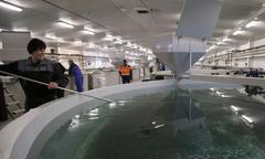 Alltech acuicultura