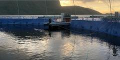Jaula marina cerrada experimental en Horsvaagen. Foto: Cermaq