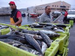 Descarga en el puerto de Vigo