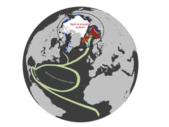 Ruta microplásticos Ártico