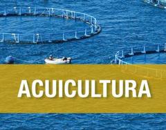 La próxima reunión del GGT de Acuicultura de la PTEPA girará en torno a la Acuicultura 4.0
