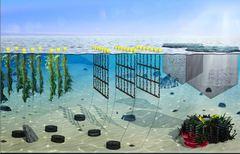 Ocean Forest