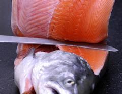 350 000 toneladas de salmón ya se alimentan con AlgaPrime ™ DHA