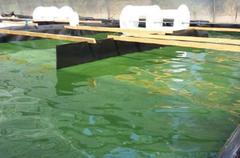 Jornada Acuicultura de las algas y sus aplicaciones