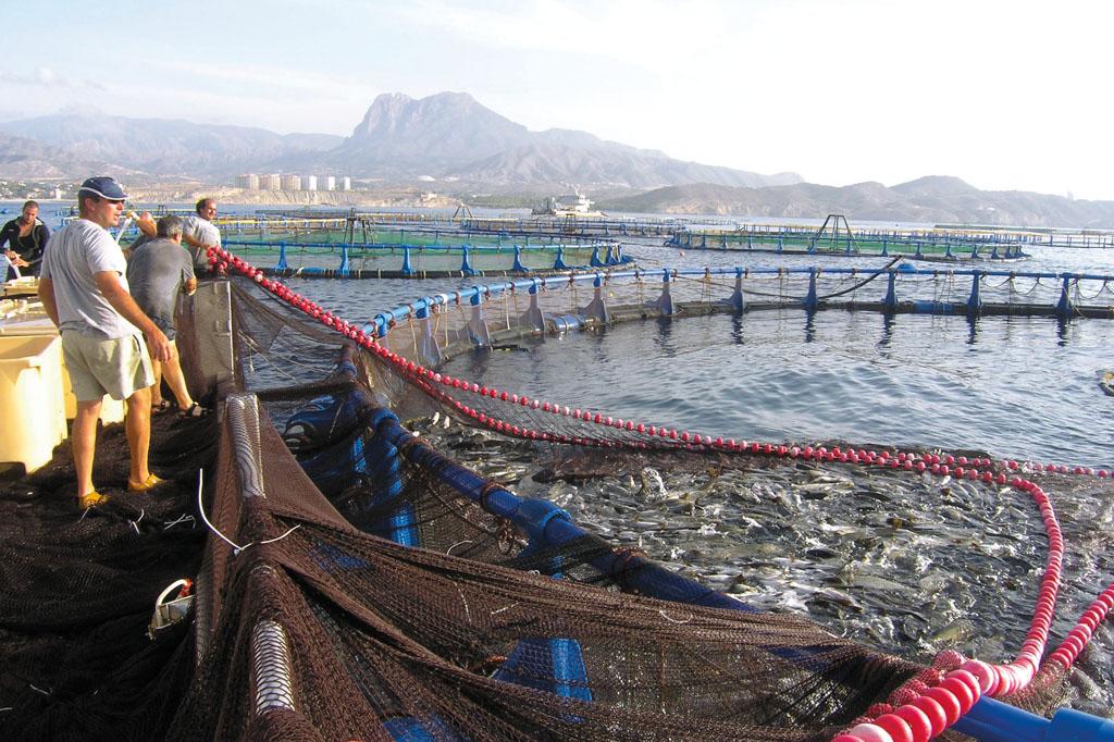 La producci n de piscicultura marina en espa a desciende for Jaulas flotantes para piscicultura