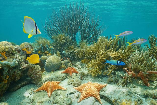 899a09f1c988 Investigadores del Centro de Excelencia ARC para Estudios de Arrecifes de  Coral (CoE de Coral) en la Universidad James Cook (JCU) han descubierto que  las ...