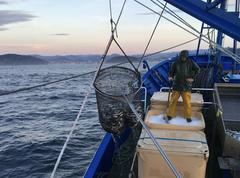 Golfo de Vizcaya