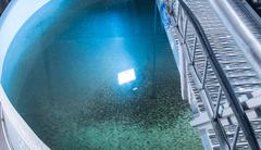 Tanques de acuicultura en tierra del Grupo Akva