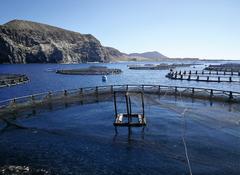 Viveros flotantes acuicultura marina Canarias. Foto: Consejería Pesca Canarias