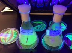 MicroSynbiotiX acuicultura vacunas orales_