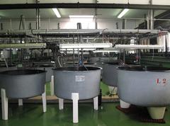 Planta de cultivo del Centro Oceanográfico de Vigo del IEO acuicultura