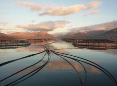 Acuicultura marina de peces. Foto: ICES