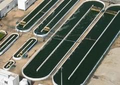 Cultivo de microalgas en zona continental acuicultura