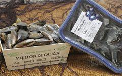 Mejillón_ Mexillón de Galicia_productos