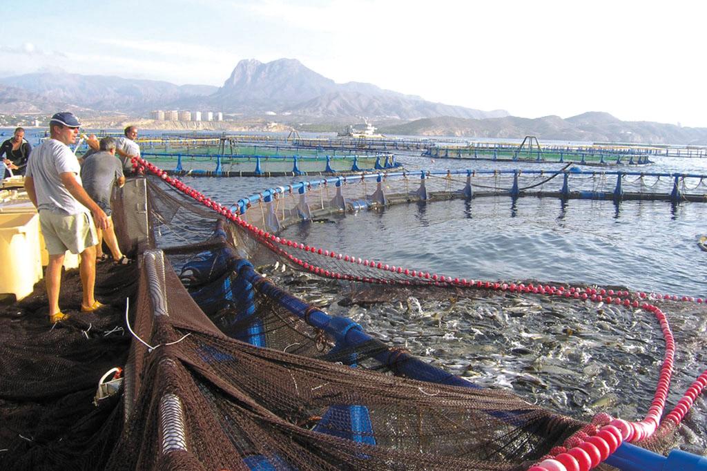 la acuicultura espa ola sigue estancada a pesar de todo su
