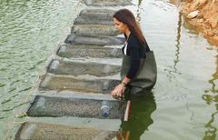 Semilla de ostra Portugal acuicultura