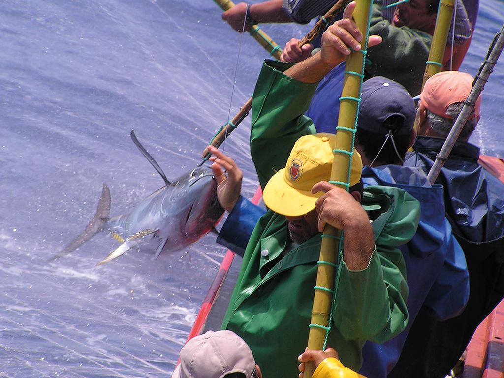 Azores defiende una cuota conjunta de atún blanco y patudo - En ...
