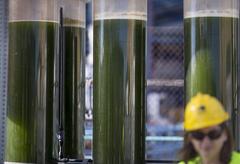 Neoalgae  microalgas acuicultura