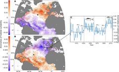 OMA y distribución del atún rojo en el Atlántico