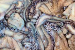 Cefalopodos