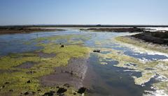 Algas en un estero andaluz acuicultura