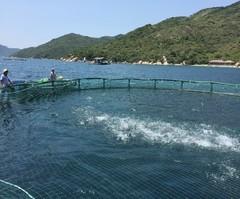 vietnam acuicultura
