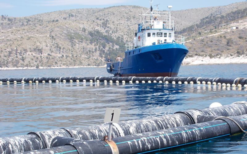 Resultado de imagen de la regulación del atún