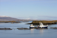 Marine Harvest Escocia