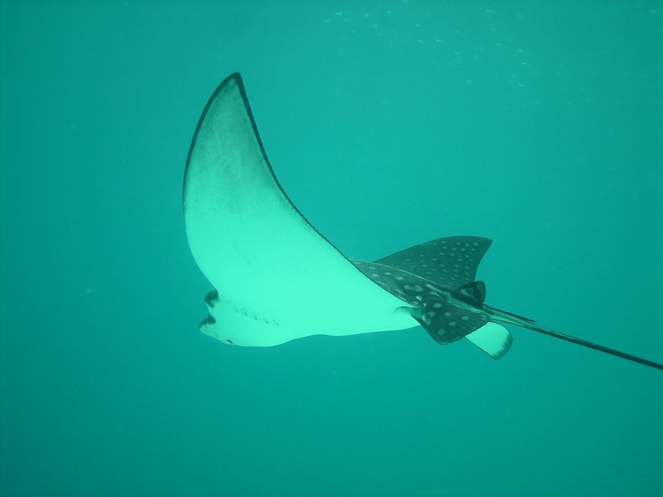 el convenio de protección sharks mou incorpora 22 especies