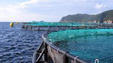Jaulas acuicultura Mediterráneo