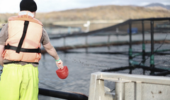 Scottish Sea Farms acuicultura Escocia