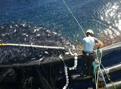 Acuicultura Canarias. Foto: Consejería Pesca Canarias