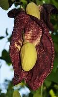 Percorrido botánico