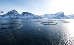 Acuicultura en Noruega. Foto: Johan Wildhagen_ Consejo de Productos del Mar de Noruega