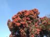 Percorrido botánico na Fundación Sales