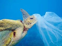 Tortuga plásticos