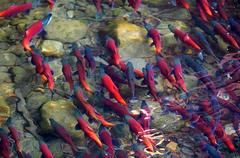 GenetiRate_ EEUU acuicultura