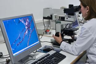 innovacion ciencia y tecnologia junta de andalucia: