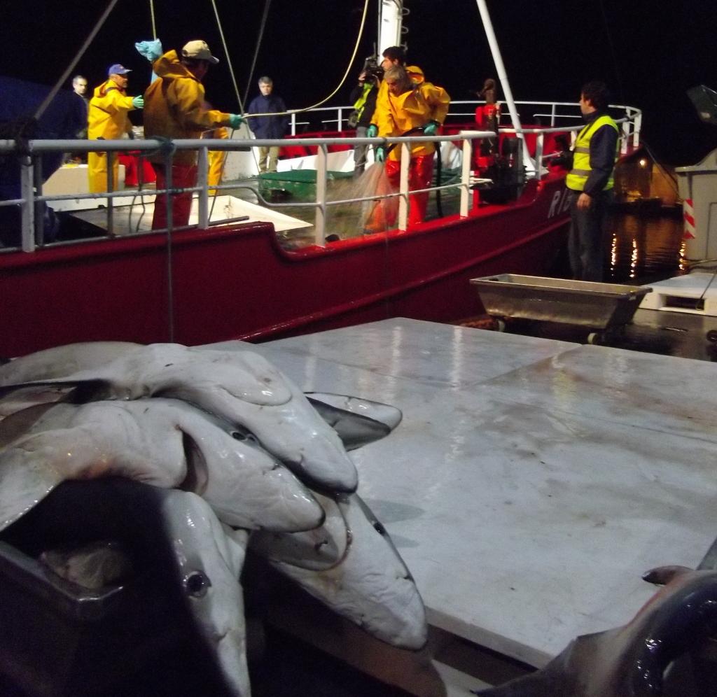 listado de empresas pesqueras: