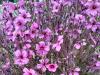 Recorrido botánico